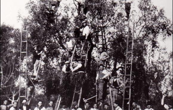 Il Primo Maggio Il lavoro fondamento della Repubblica (di Carmelo Molfetta).